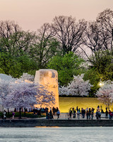 MLK Memorial During Peak Bloom 2016