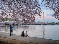 Washington Monument During Peak Bloom 2016 #1